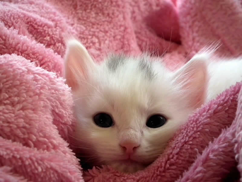 Kitten Brannock Vet Clinic Motherwell