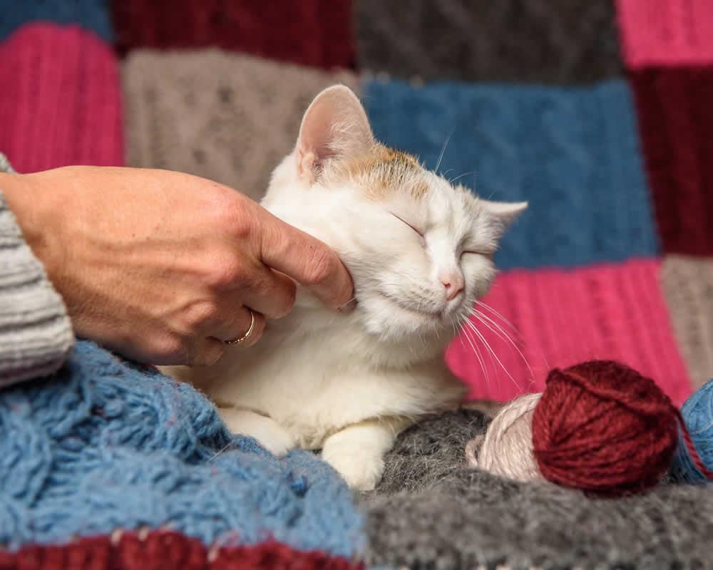 stroking cat